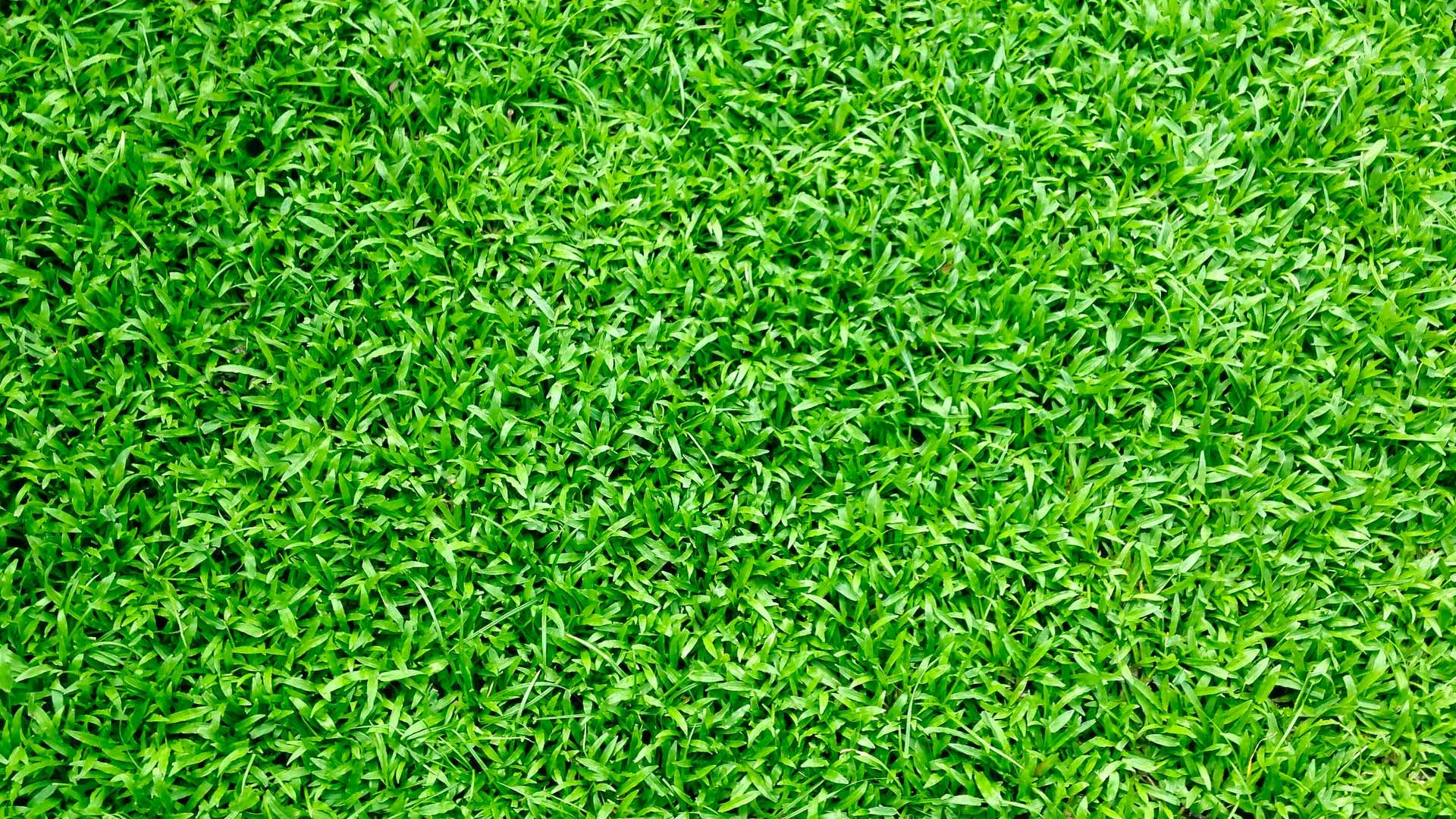 Green, healthy lawn grass in Woodstock, GA.