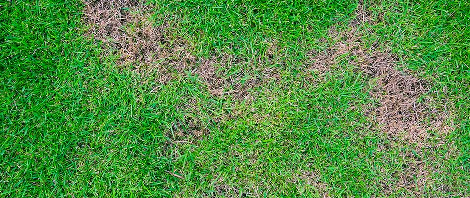 Brown spot lawn disease in the grass at a Woodstock, GA property.