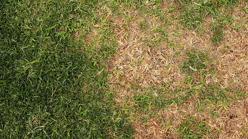 Lawn disease and pest control services in Kennesaw, GA.