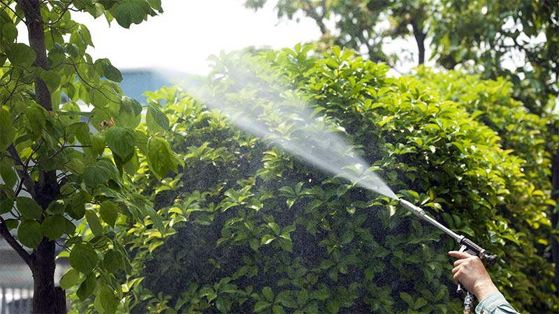 Tree and shrub care services in Holly Springs, GA.